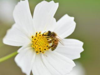 山田養蜂場みたいな会社になれますか?
